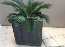 Choose Sanstone NZ for all your cube planter needs. We manufacture locally.